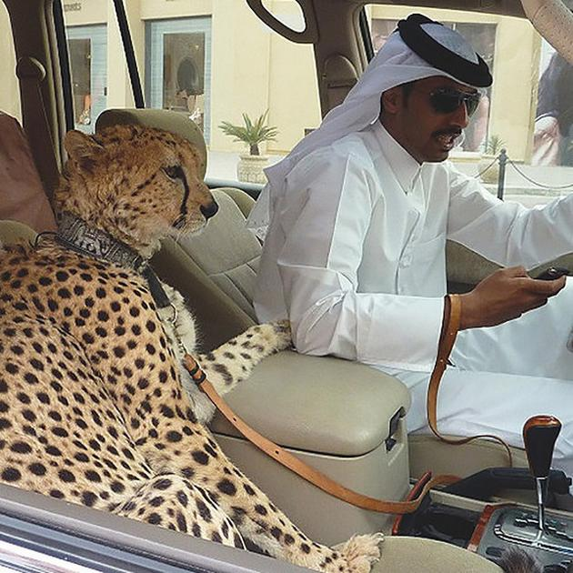 The rich people in Dubai own exotic pets