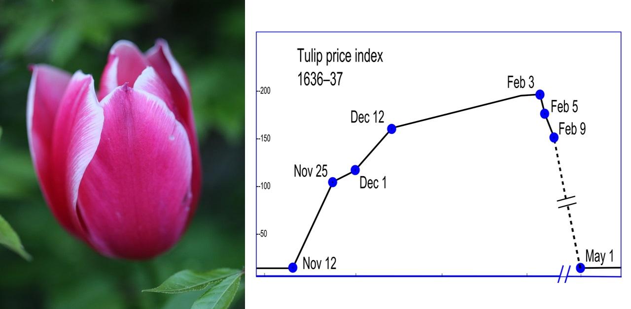 Mass Hysteria Tulip Holland