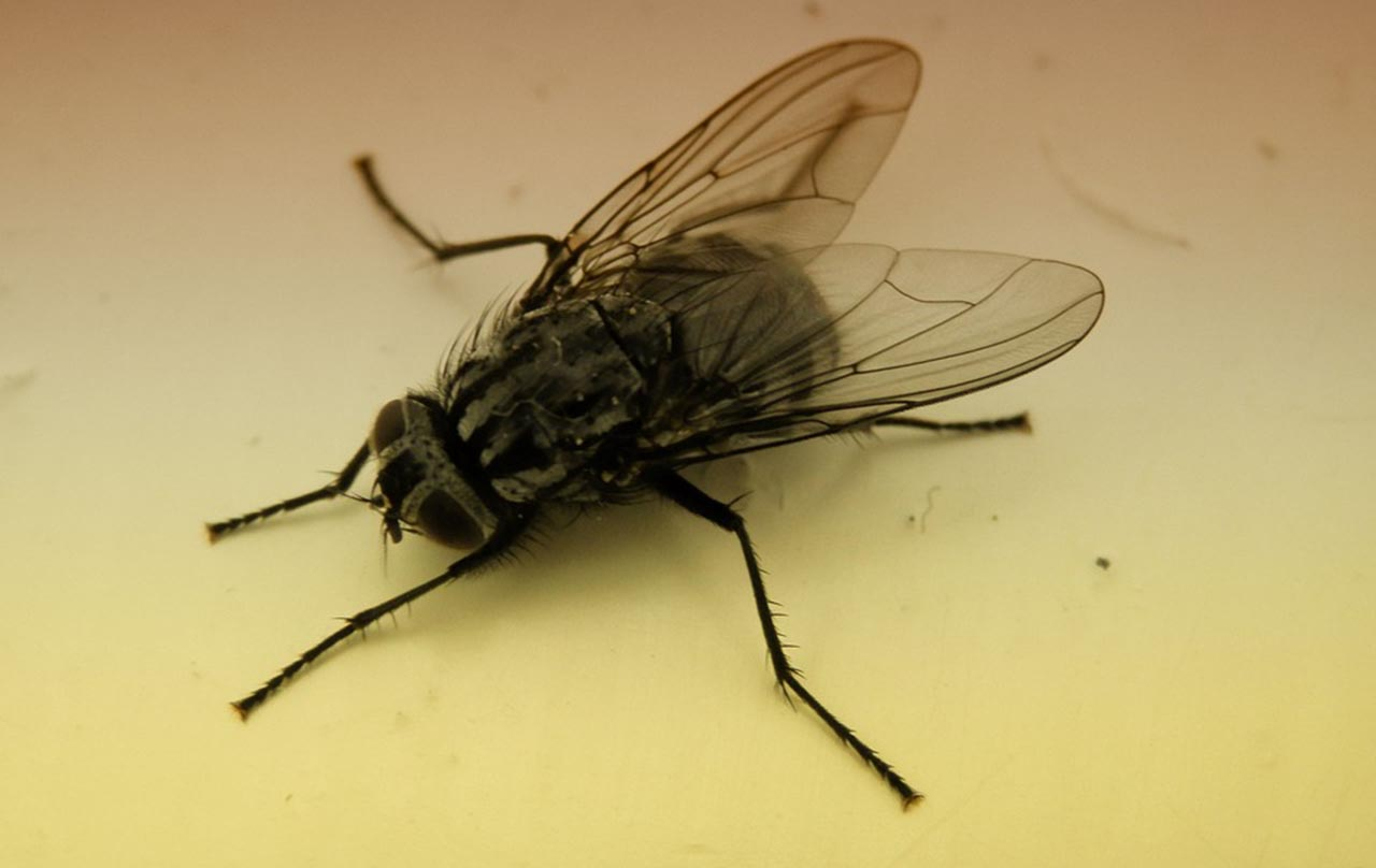 By observing the type of insects, forensic scientists can estimate the time of death