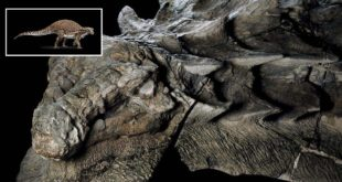 Nodosaur, Dinosaur, discovery, Alberta, Canada