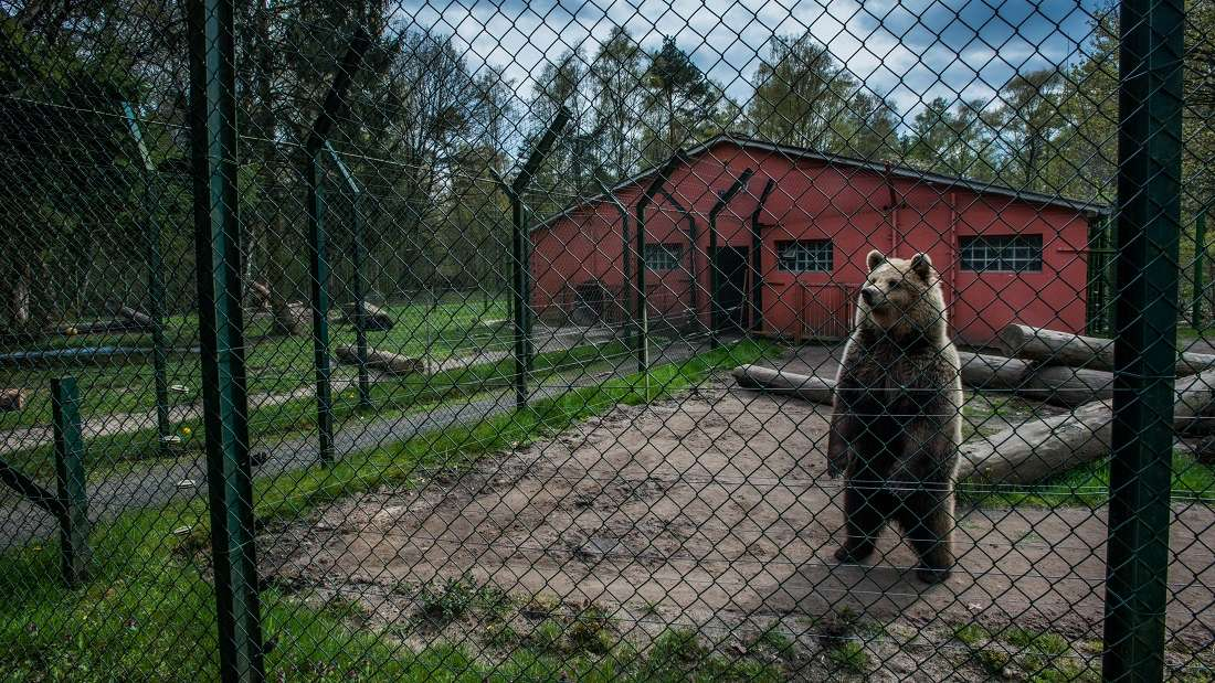Animals in captivity, Jo-Anne McArthur, photography