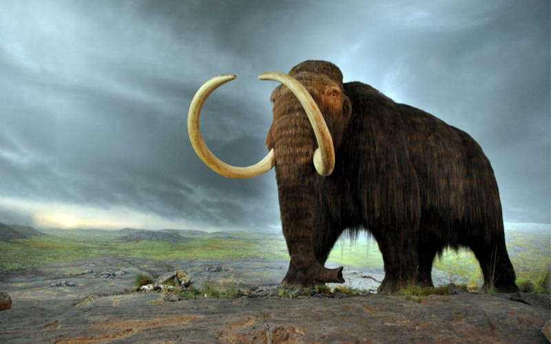 Wooly Mammoth extinct