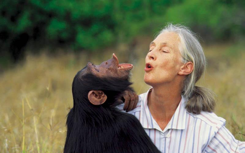 Gombe chimpanzee war, Jane Goodall