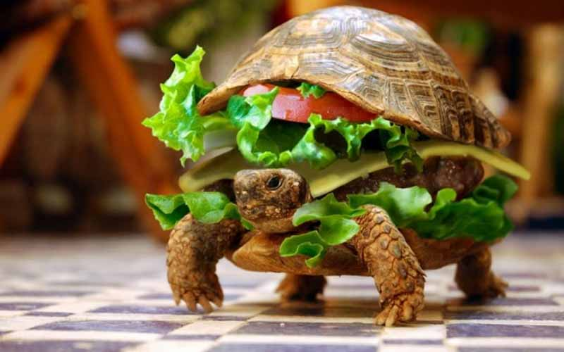 Turtle and hamburger