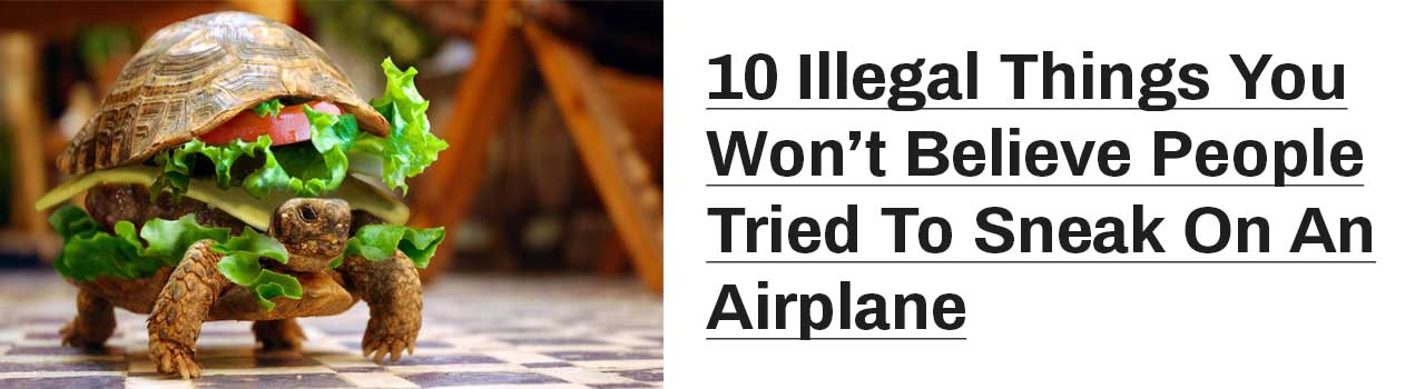 Illegal things people tried to smuggle into airplanes,