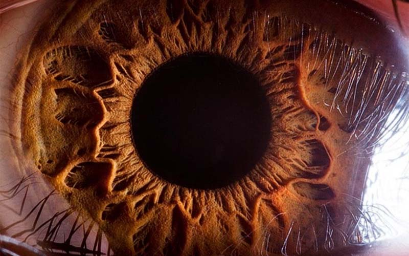 Human eye, closeup, microscope