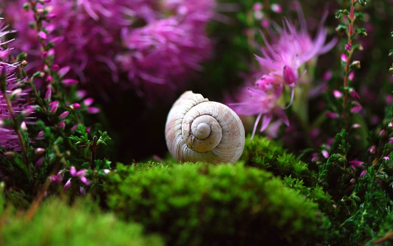 Snail, shell, nature, photo