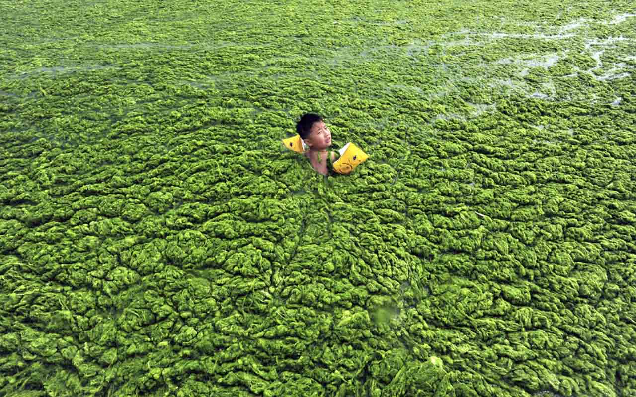 Boy swims in algae