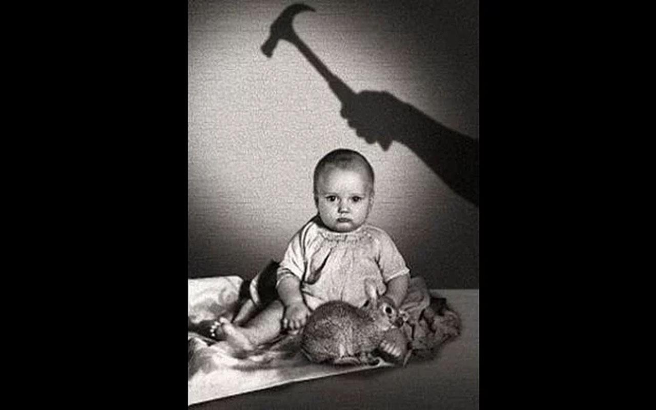 Little Albert, Hammer, rabbit, fact, facts