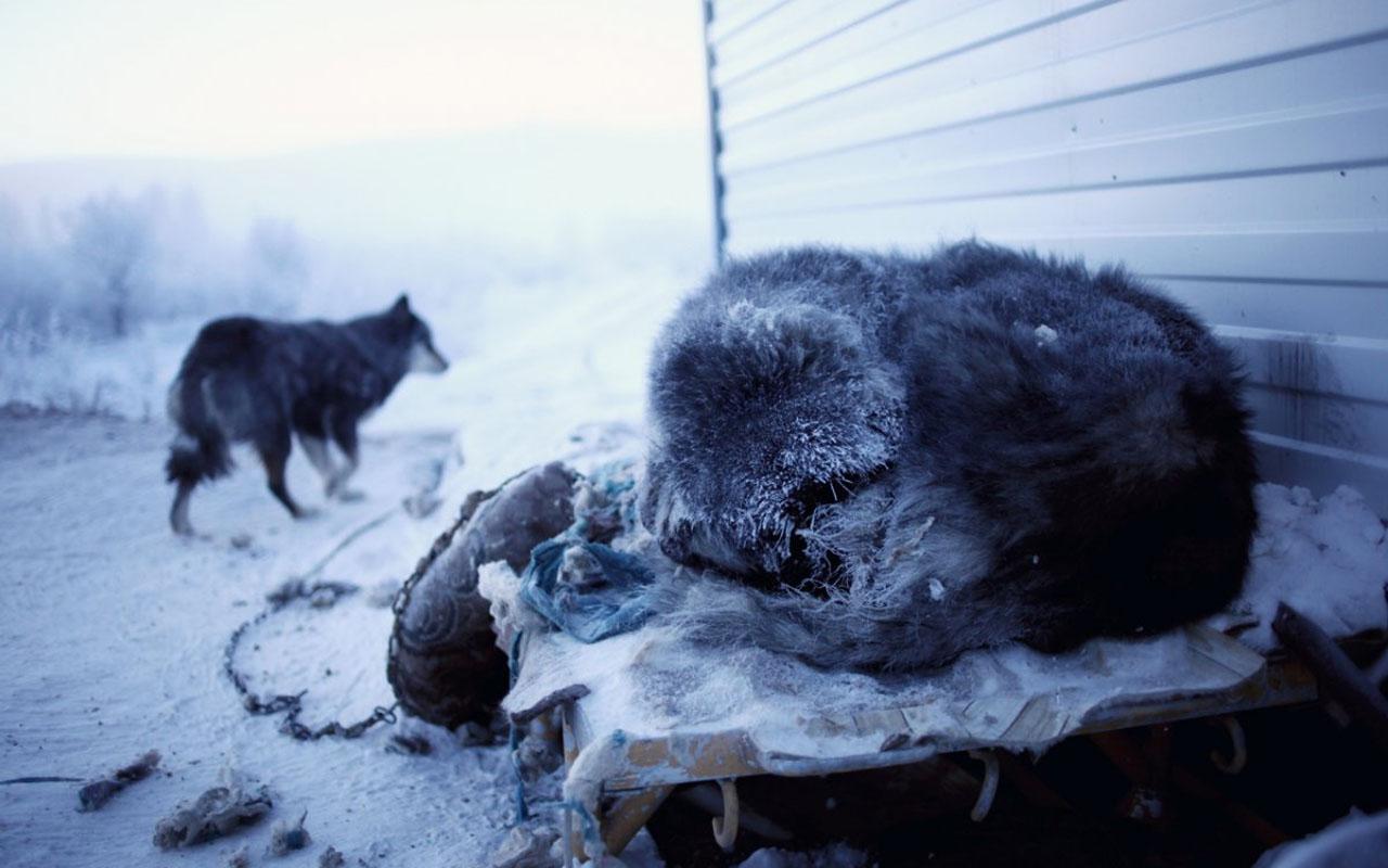 Cold, temperature, dog, dogs, survive, survival