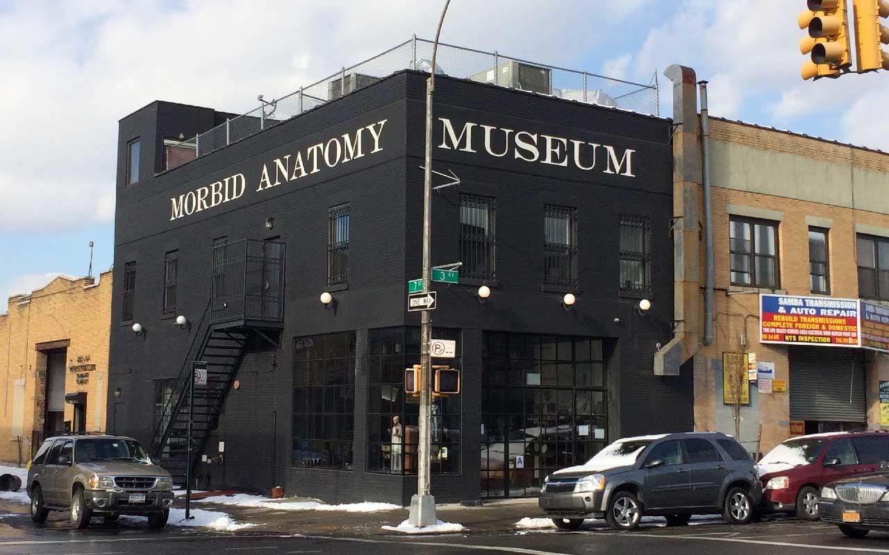 Morbid Anatomy Museum | Brooklyn, New York