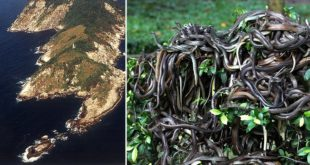 Snake Island, Forbidden Rock, lha da Queimada Grande, Brazil, Coast, Fact, Facts, Mind Blowing Facts