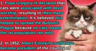 historical facts, fact, life, United States, Albert Einstein, Life, Britain, Europe,