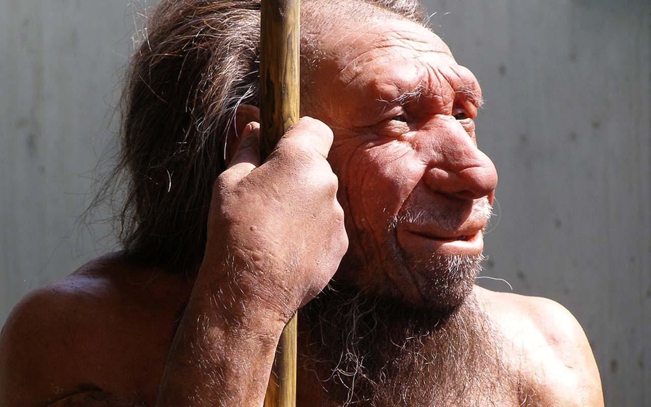 Minority of Neanderthals were left-handed.