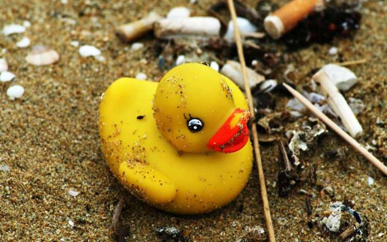 A lot of rubber ducks, washed ashore, beach,