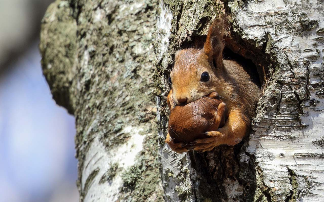 Squirrel, baby, adopt, life, nature