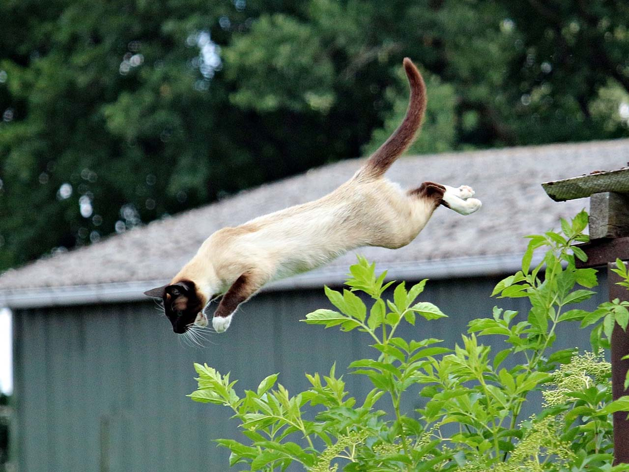 "Cats land on their feet using a sort of internal gyroscope called ""aerial righting reflex""."