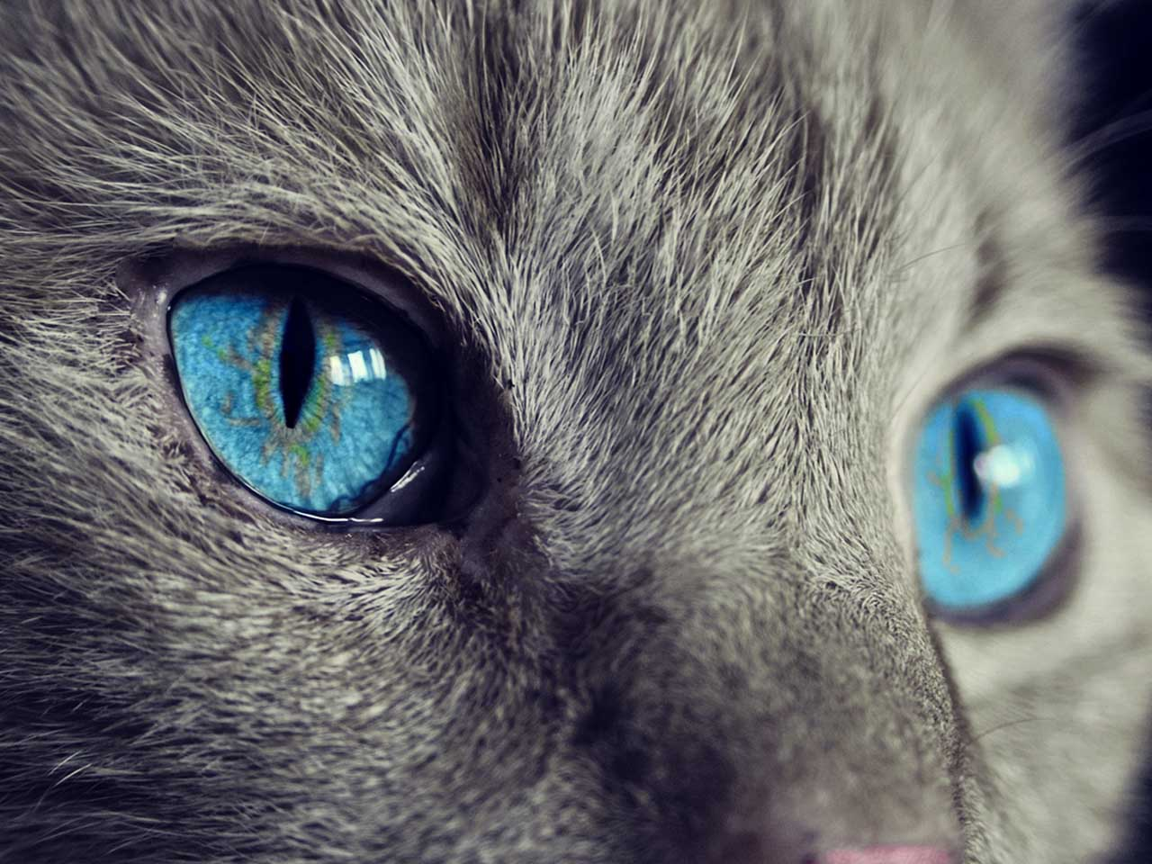 "Cats have a third eyelid called a ""haw"". It's generally only visible when they're unwell."