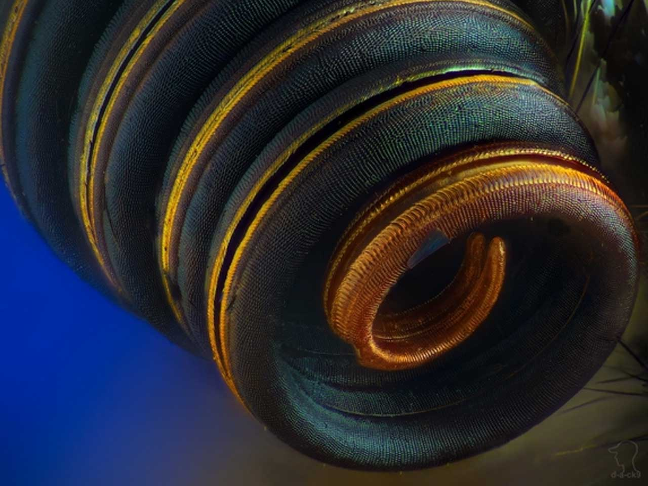 A butterfly trunk under the microscope