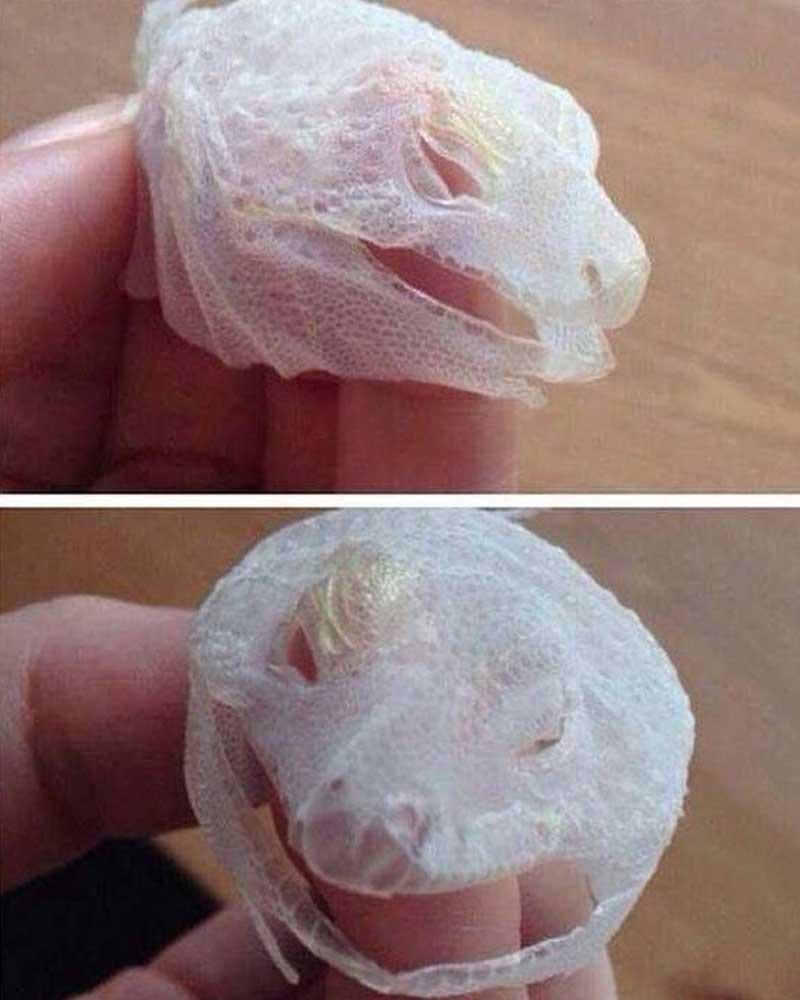 Bonus: Lizard shed its skin perfectly all in one big push.
