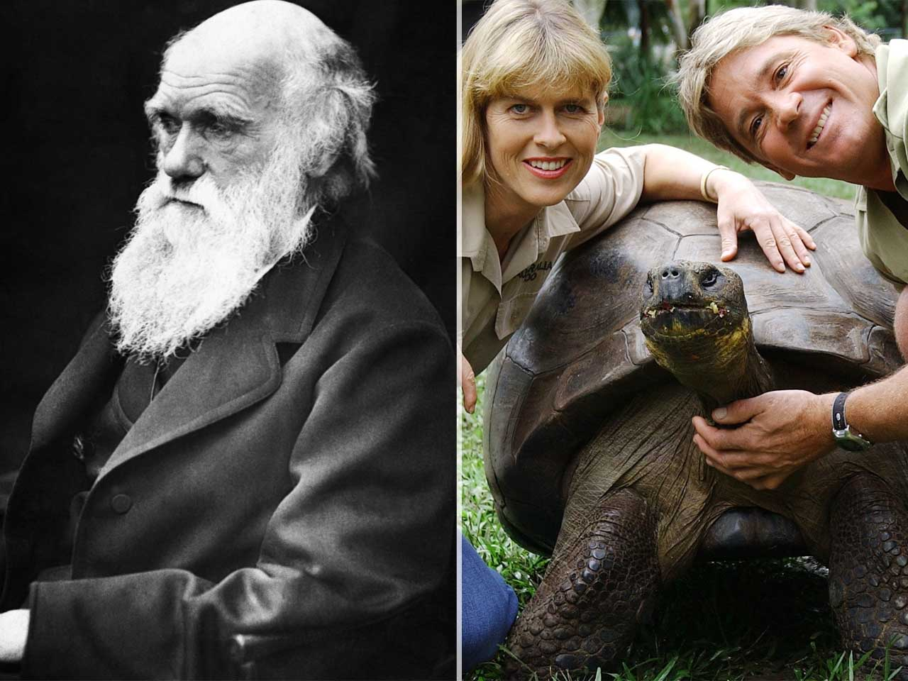 Harriet The Tortoise, Who Died In 2006, Had Seen Charles Darwin In Person