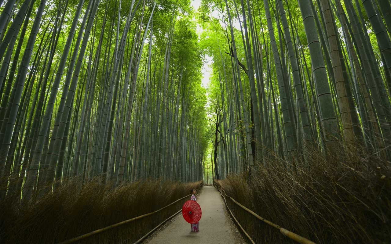 Arashiyama, Japan, Bamboo forest