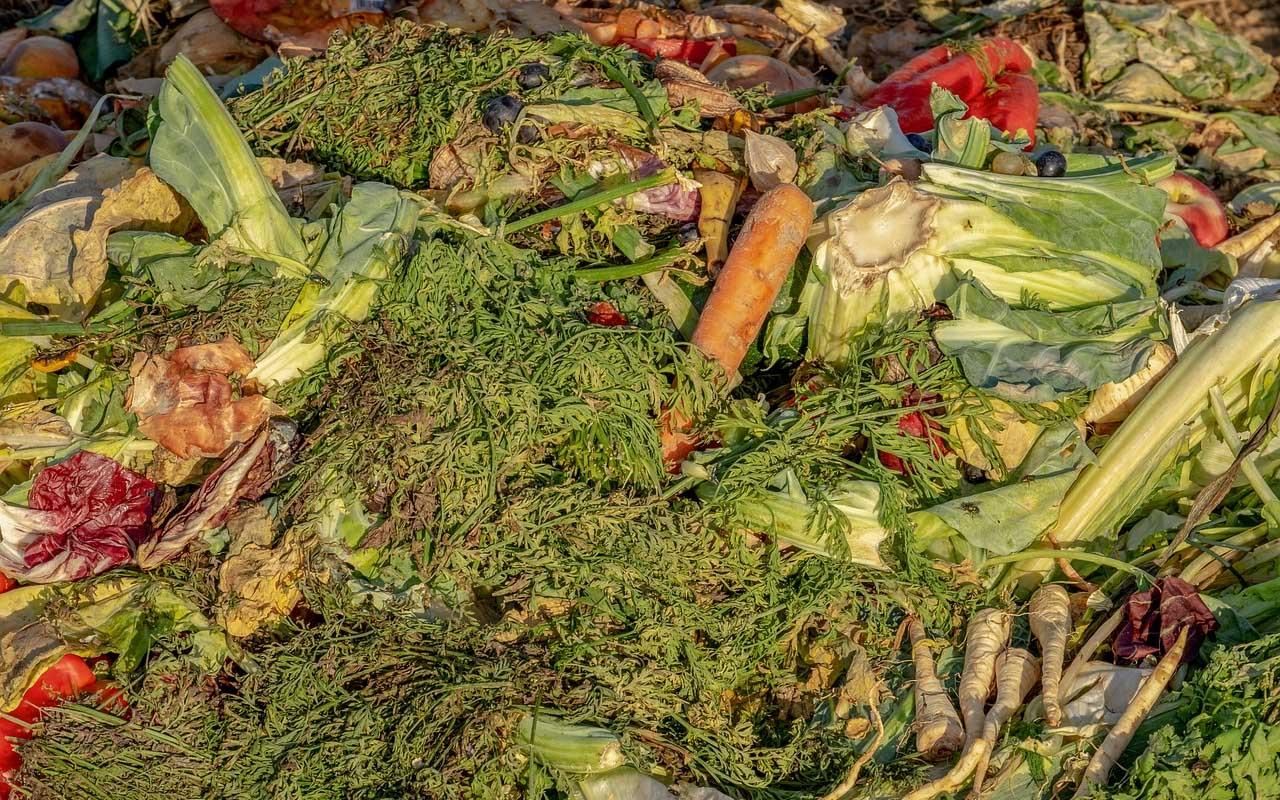 Food, waste, trash, people, world