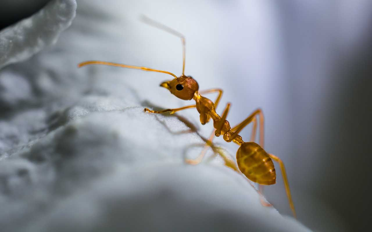 ants, sleep, fact, facts, amazing, life, Earth, planet, universe