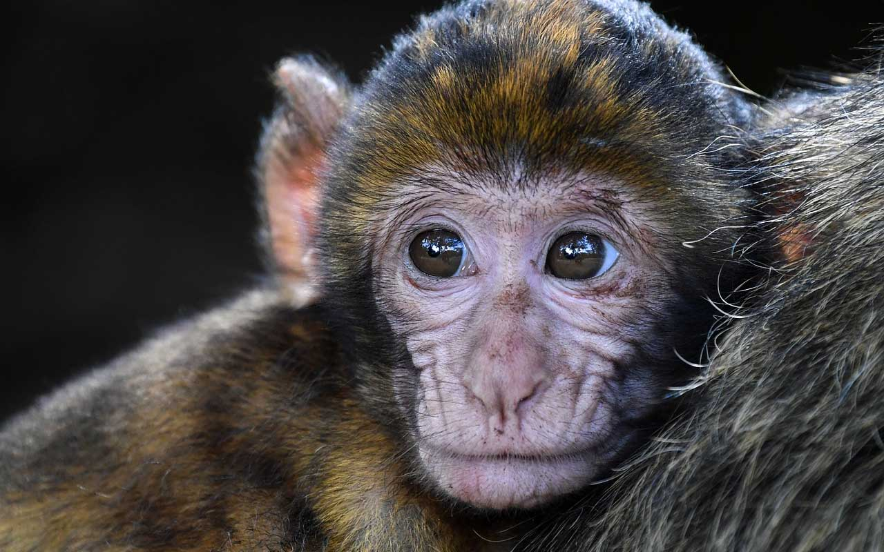 Chinese scientists cloned a monkey.