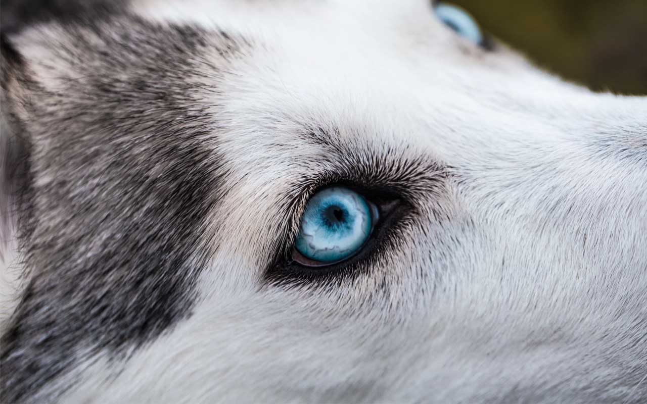 Dogs can actually see colors, but not nearly as many as us.