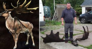 elk, Irish Elk, Great Elk, Ireland, find, discovery, fisherman