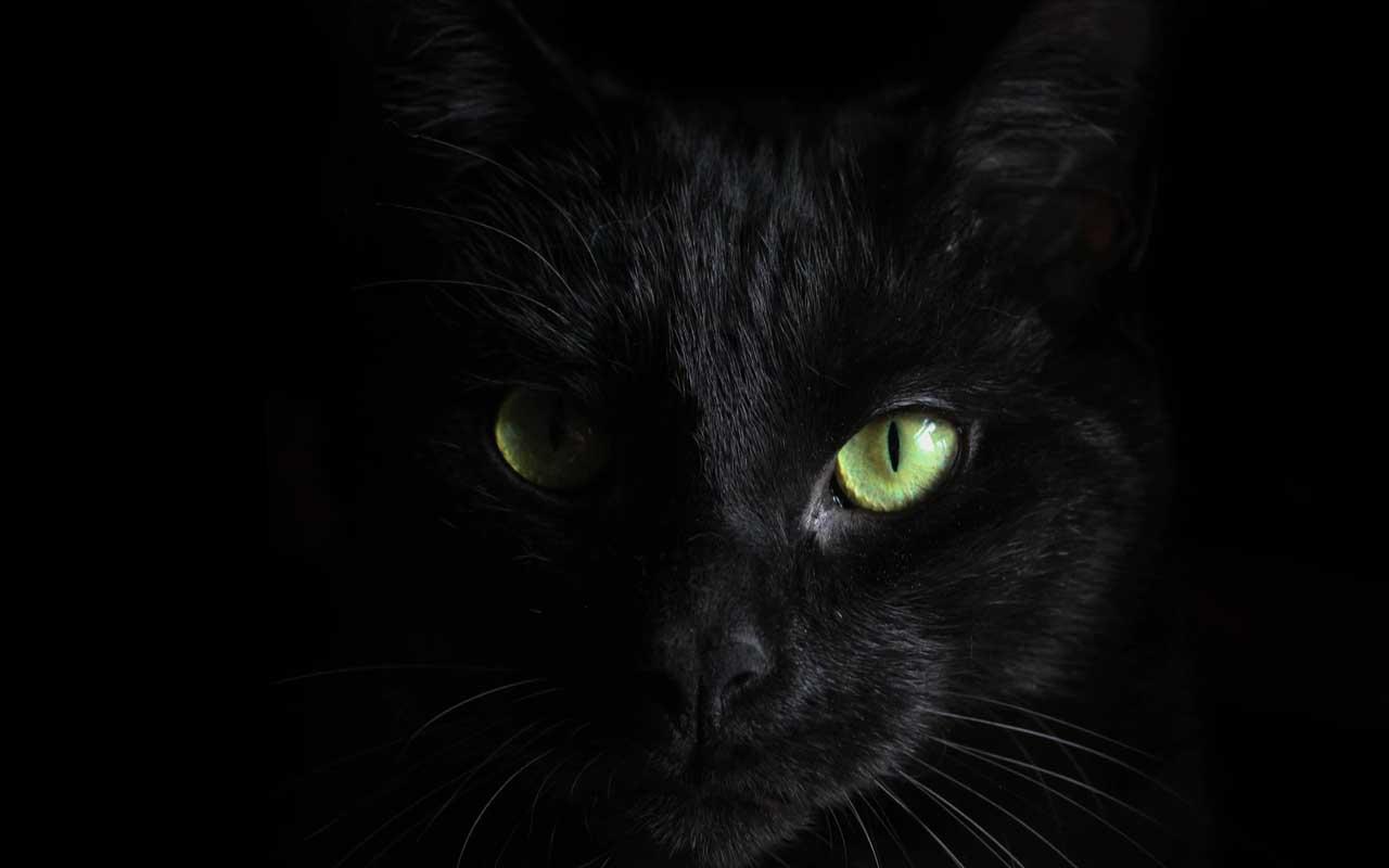 Black cat, bat, spiders, Halloween