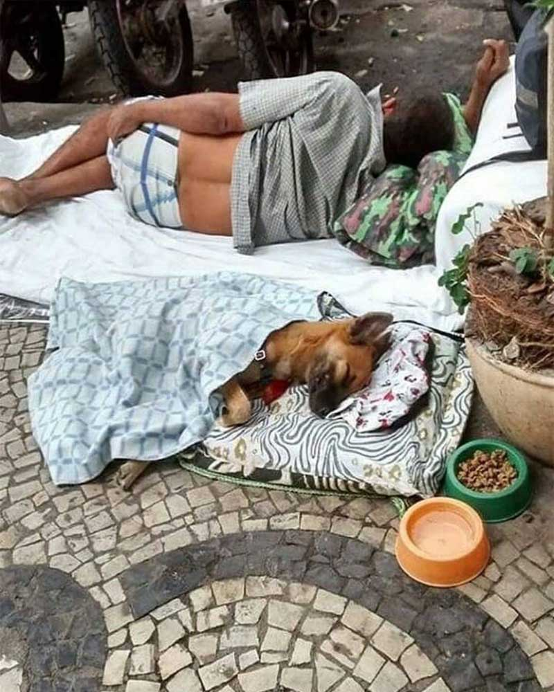 friends, share, dog, man, homeless