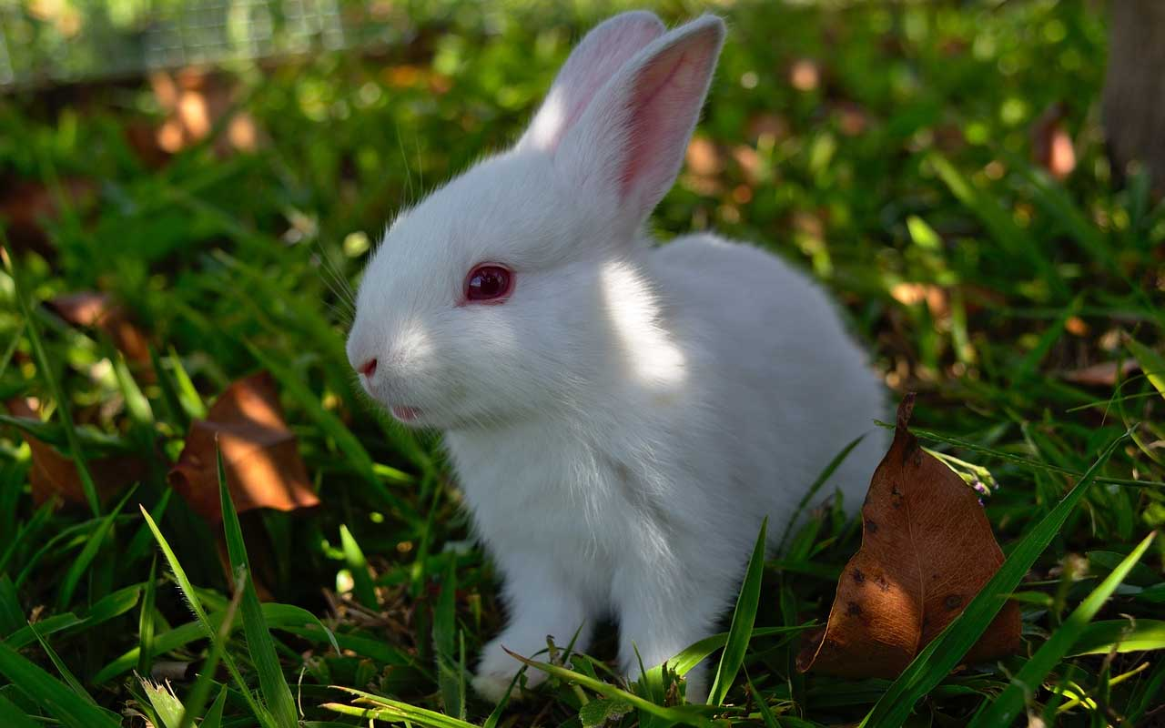 rabbit, grass, albino, planet