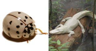 albino, animals, planet, facts