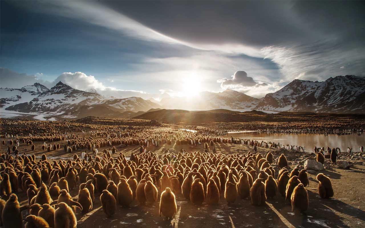 Antarctica, animals, facts, life