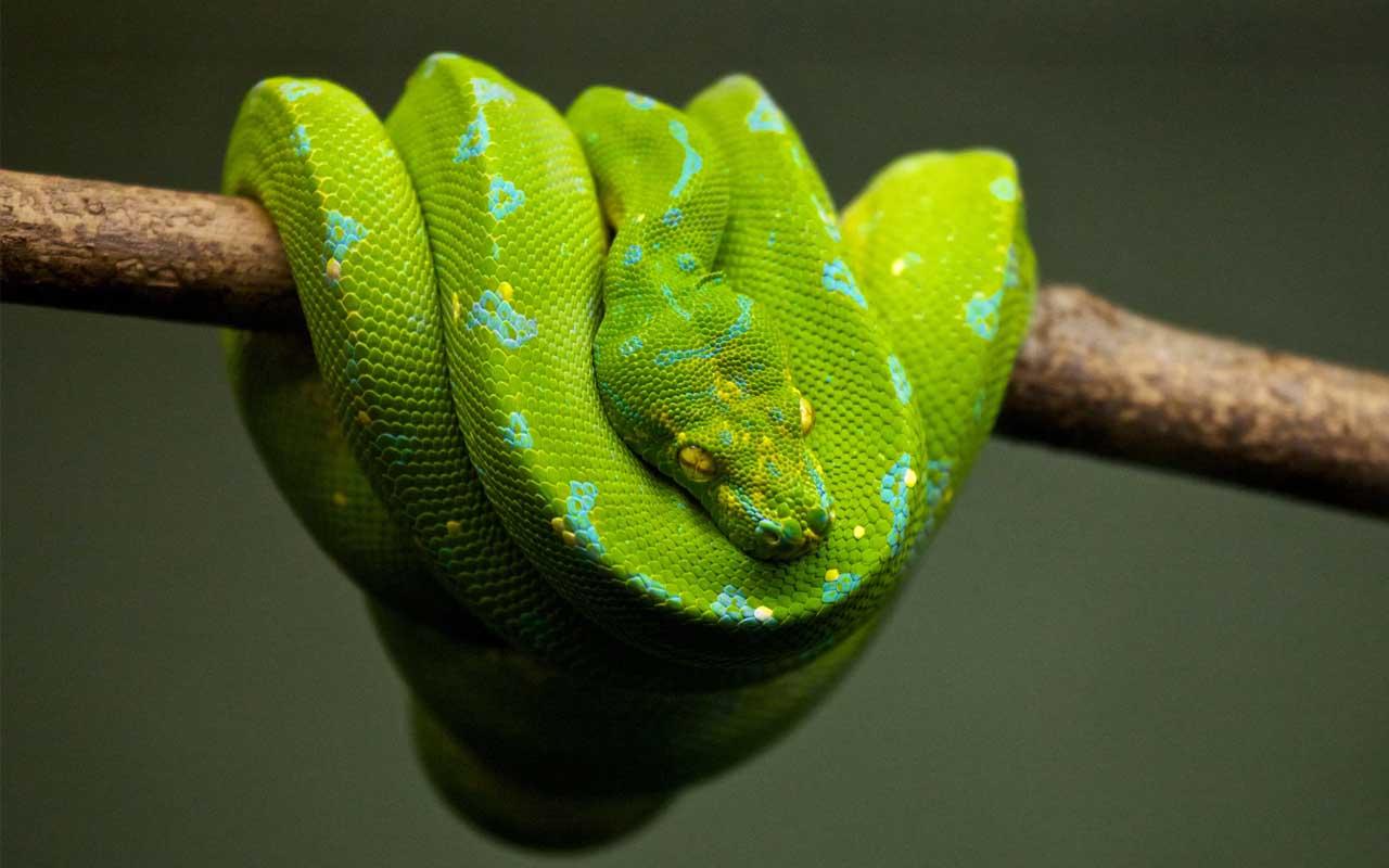 snakes, reptiles, facts, Antarctica