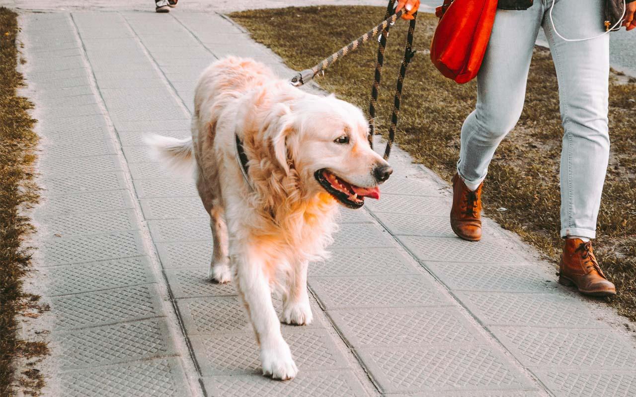 dog, life, health, facts