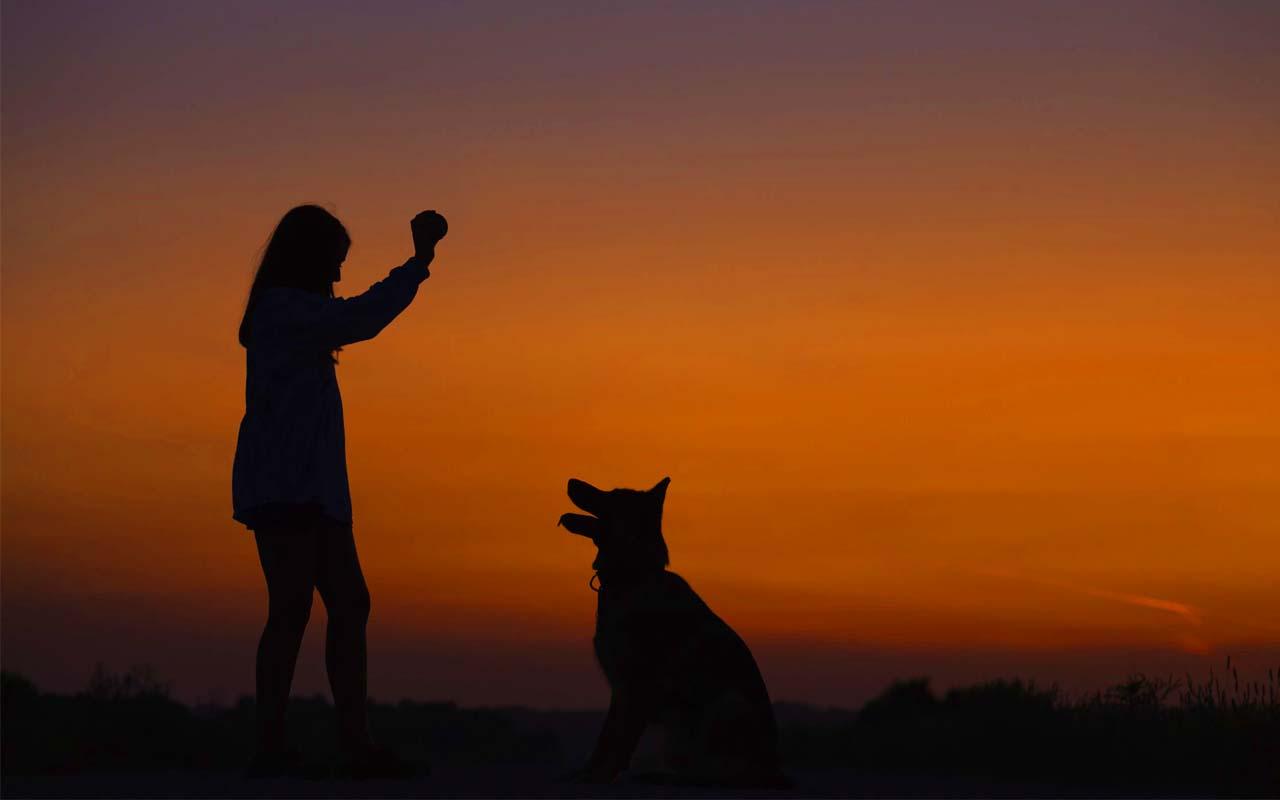dog, playing, ball, friend