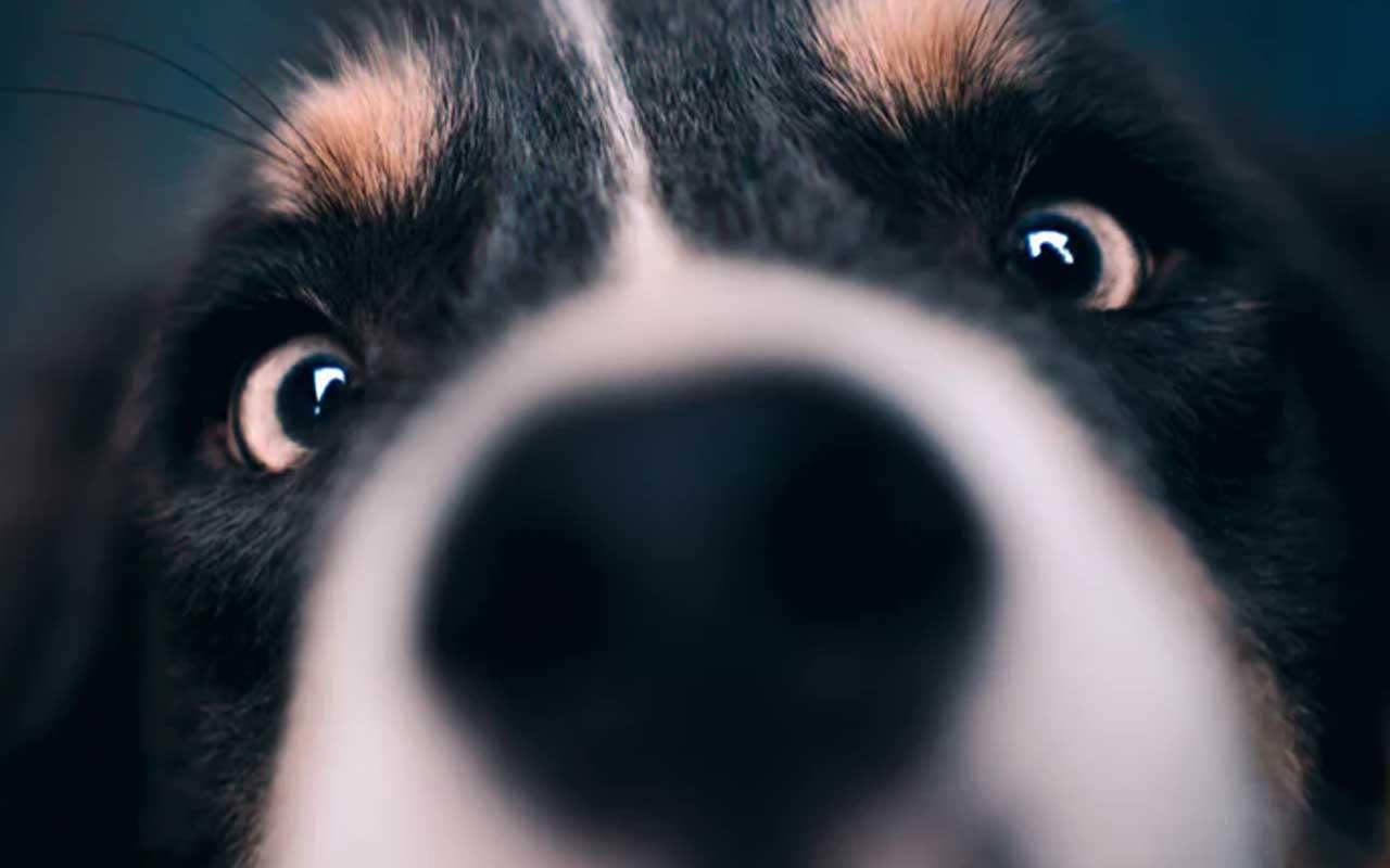 dog, smell, nose, humans