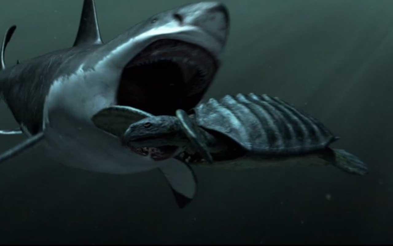 Meg, shark, swimming, ocean