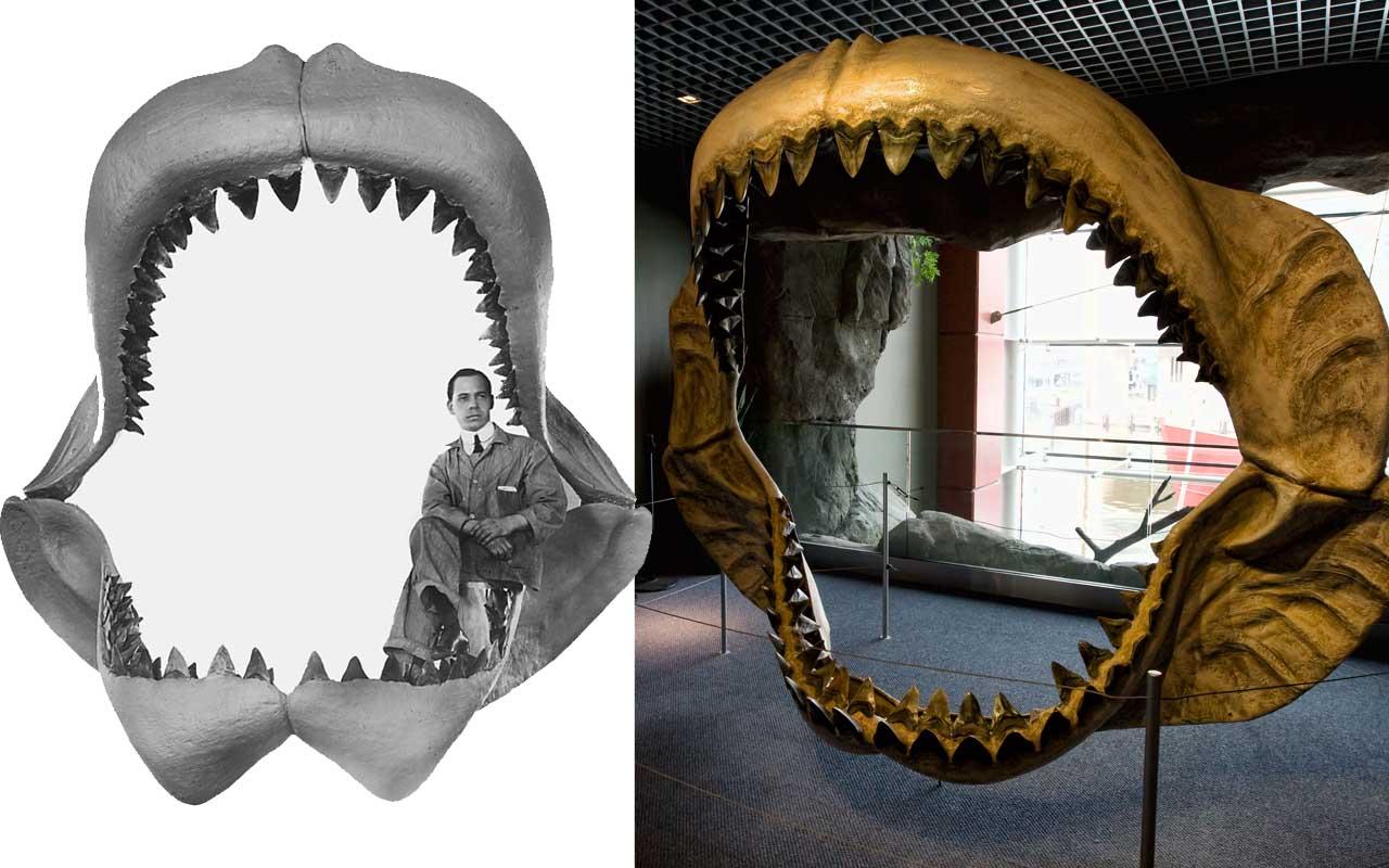 Megalodon, shark, life, ocean