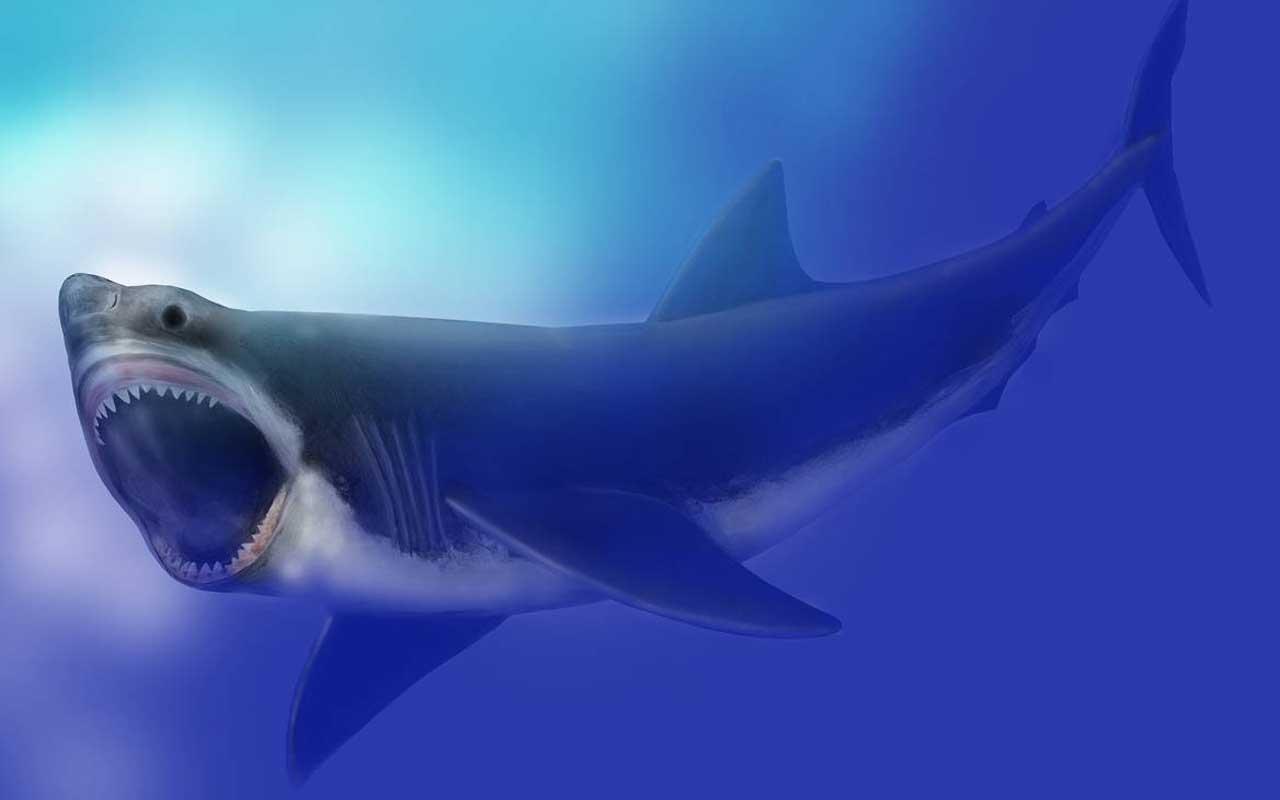 Meg, shark, prehistoric, creature