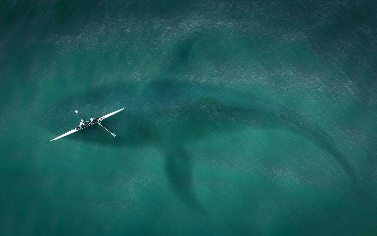 Megalodon shark, mammal, ocean, world