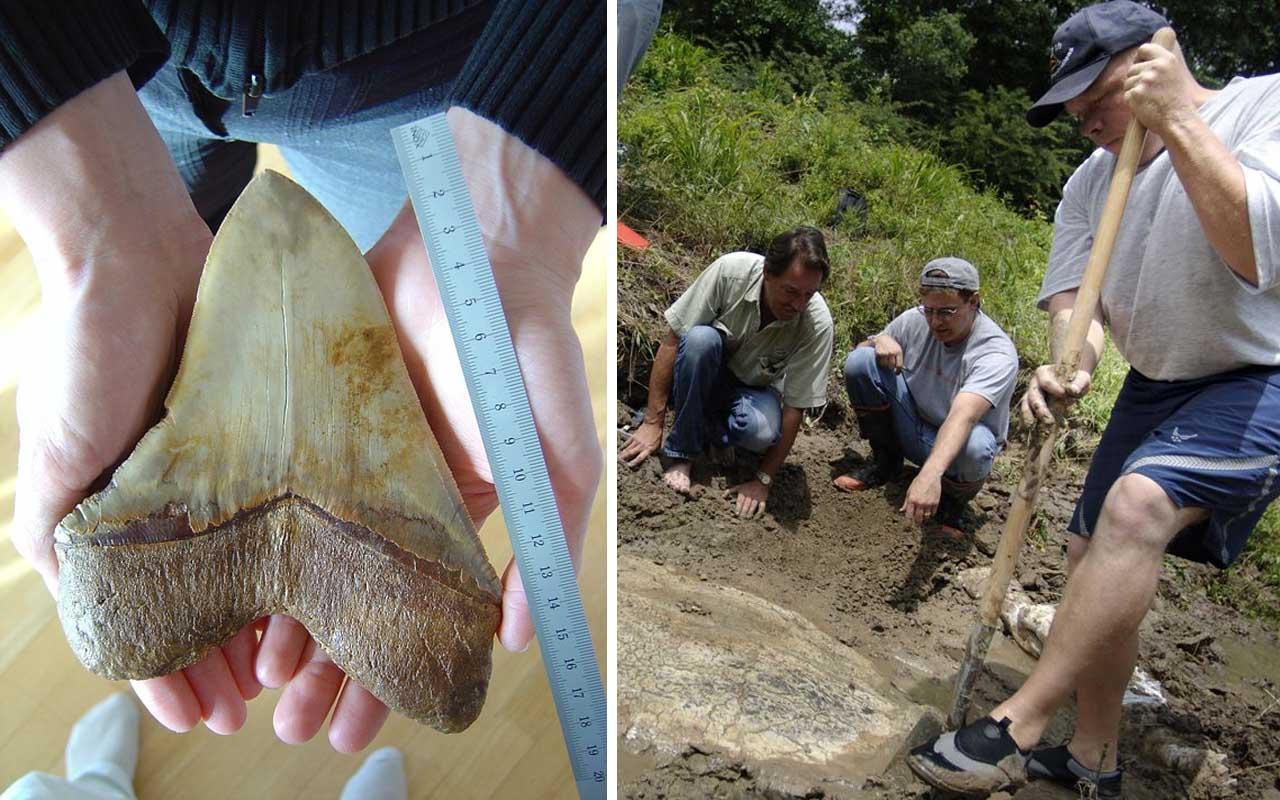 meg, shark, excavation, geology