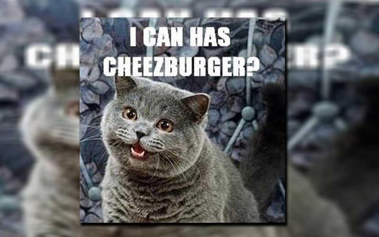 Icanhascheezburger, funny, memes, cat pictures