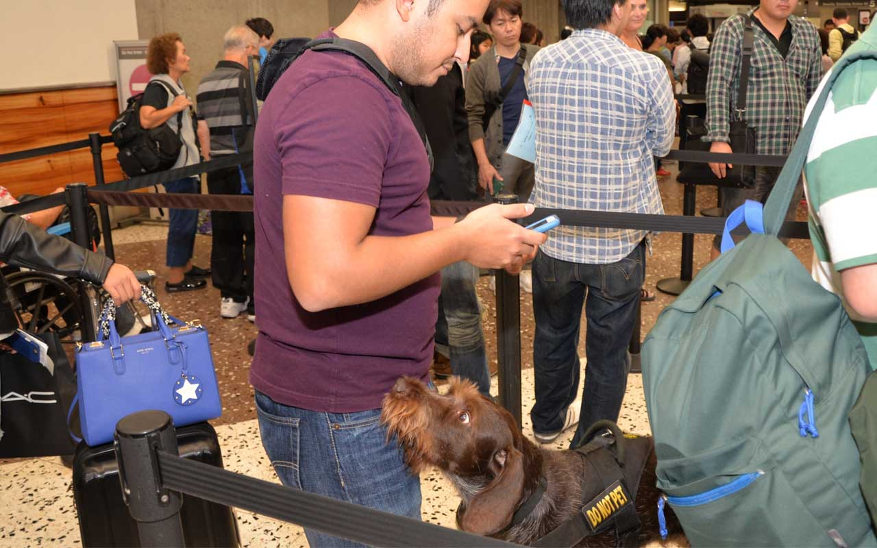 TSA dog, airport, security