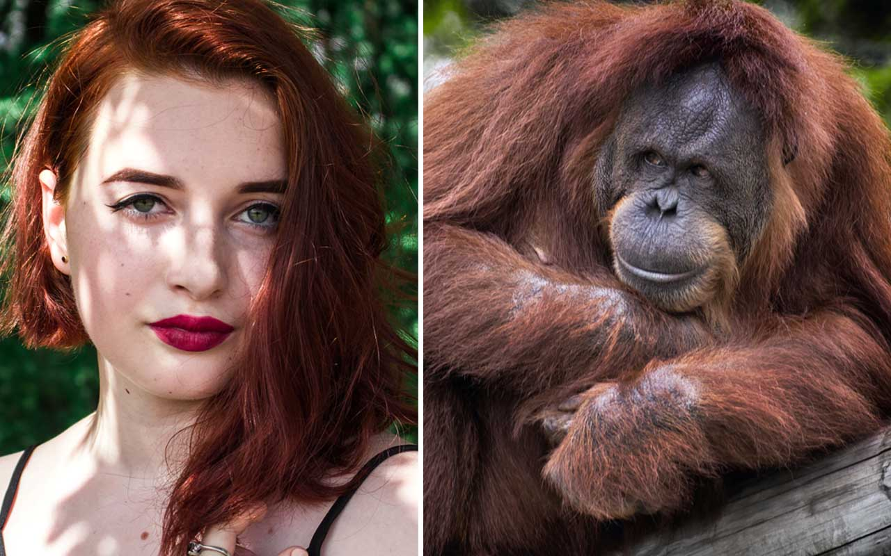 Orangutan, redhead, people, strange, facts
