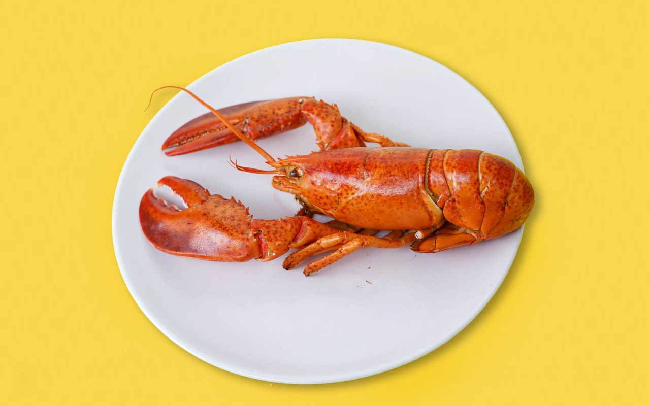 Lobster, America, food, delicacy