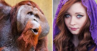 orangutan, facts, strange, life, nature